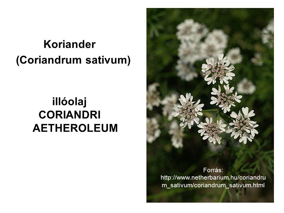 illóolaj CORIANDRI AETHEROLEUM