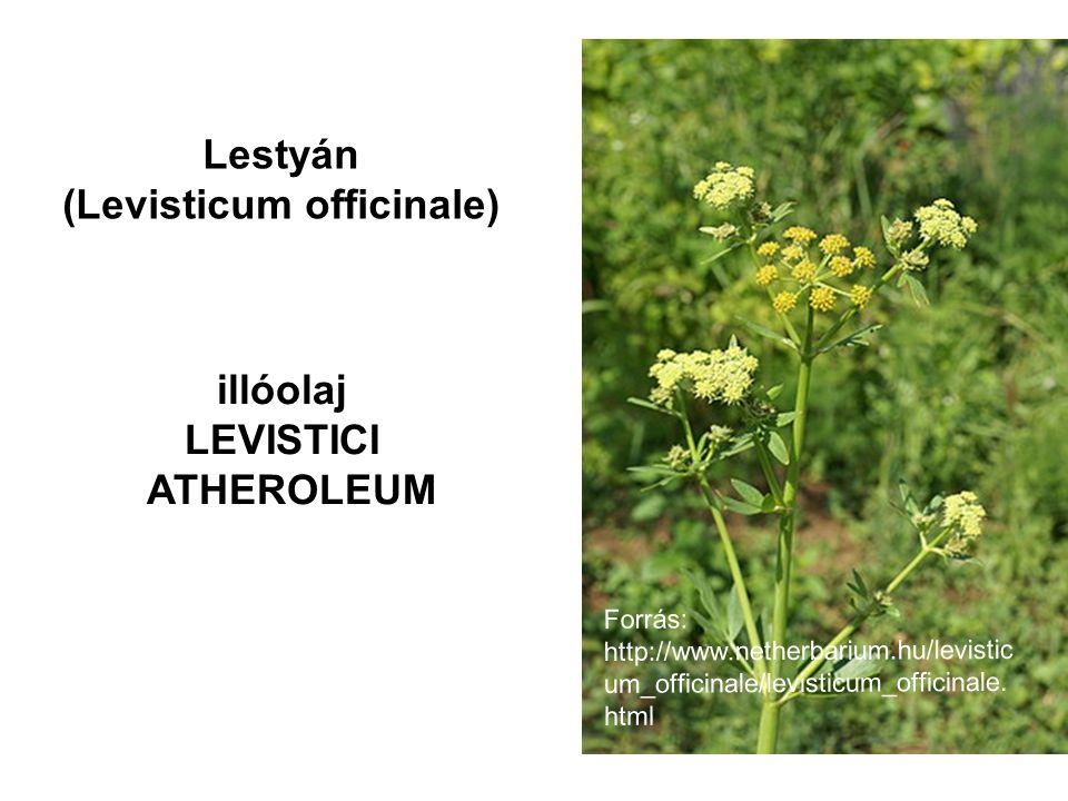 (Levisticum officinale)
