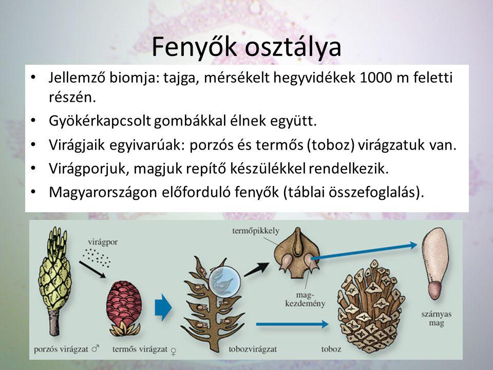 Fenyők osztálya Jellemző biomja: tajga, mérsékelt hegyvidékek 1000 m feletti részén. Gyökérkapcsolt gombákkal élnek együtt.
