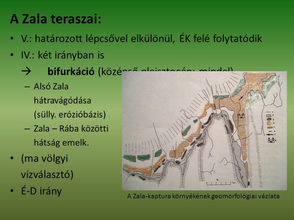 A Zala teraszai: V.: határozott lépcsővel elkülönül, ÉK felé folytatódik. IV.: két irányban is.  bifurkáció (középső pleisztocén: mindel)