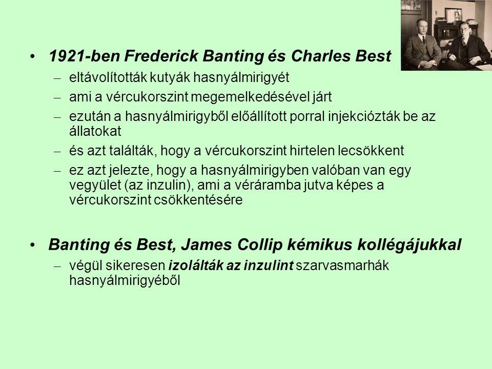 1921-ben Frederick Banting és Charles Best