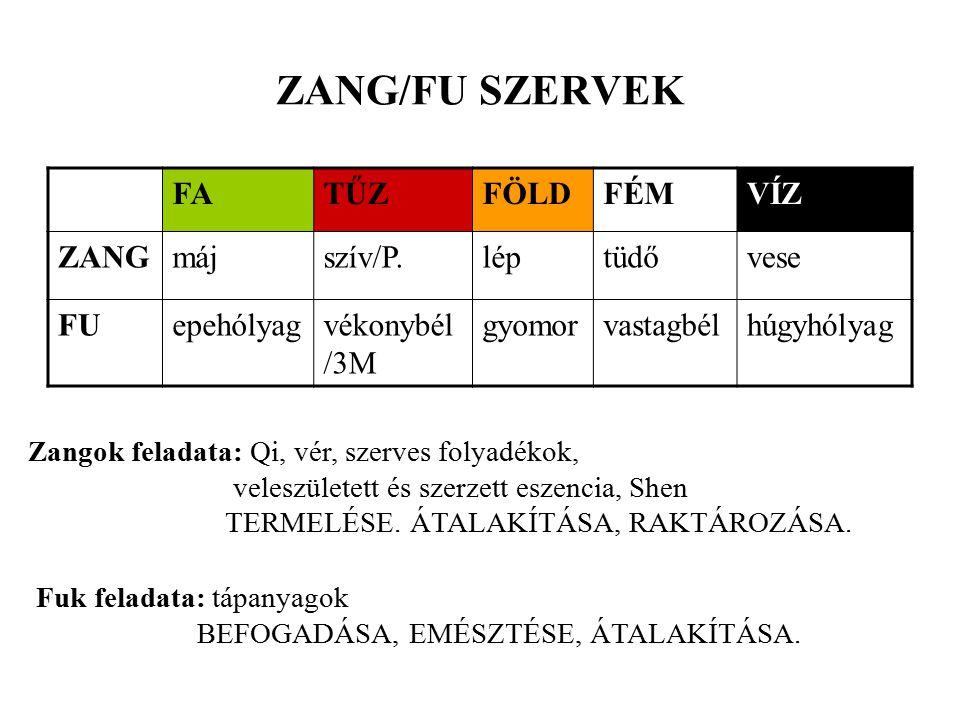 ZANG/FU SZERVEK FA TŰZ FÖLD FÉM VÍZ ZANG máj szív/P. lép tüdő vese FU