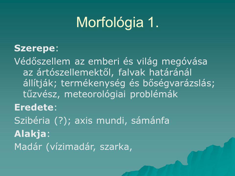 Morfológia 1. Szerepe: