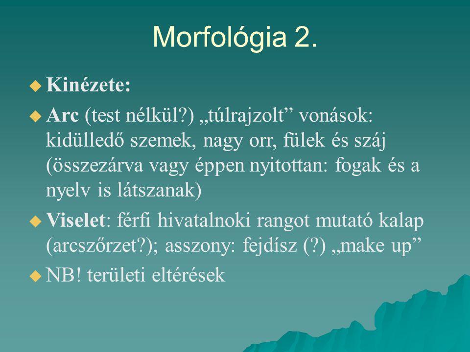 Morfológia 2. Kinézete:
