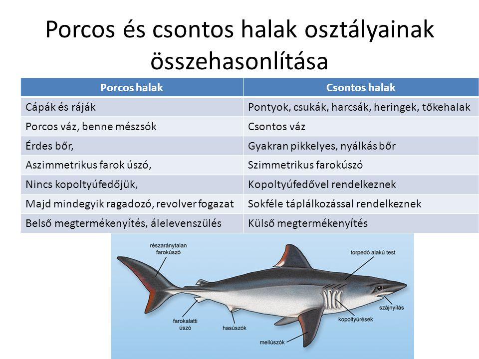 Porcos és csontos halak osztályainak összehasonlítása