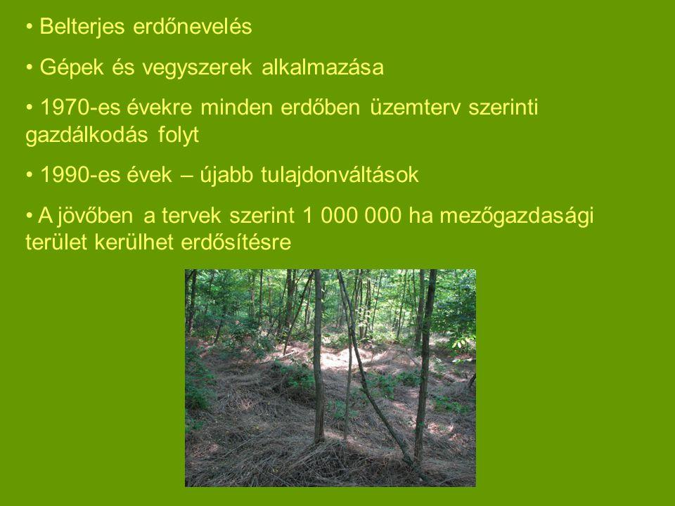 Belterjes erdőnevelés