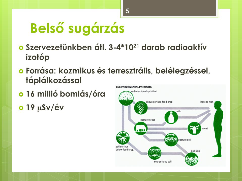 Belső sugárzás Szervezetünkben átl. 3-4*1021 darab radioaktív izotóp