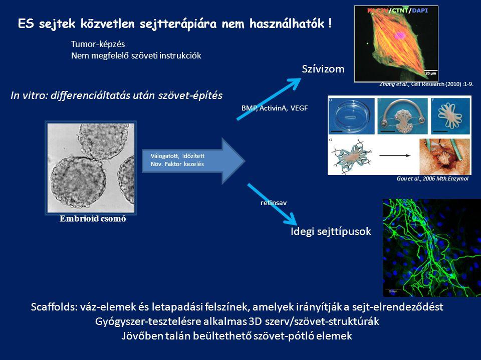 ES sejtek közvetlen sejtterápiára nem használhatók !