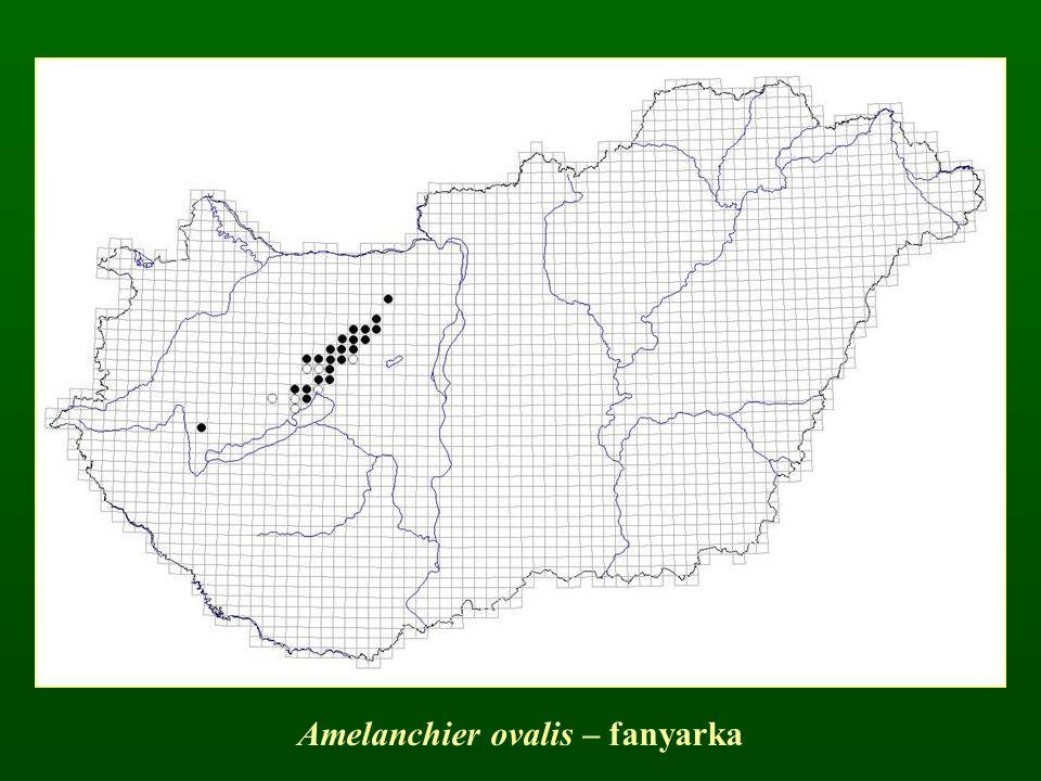 Amelanchier ovalis – fanyarka
