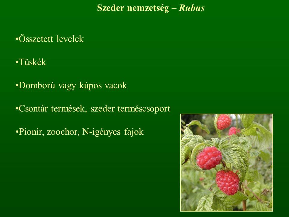 Szeder nemzetség – Rubus