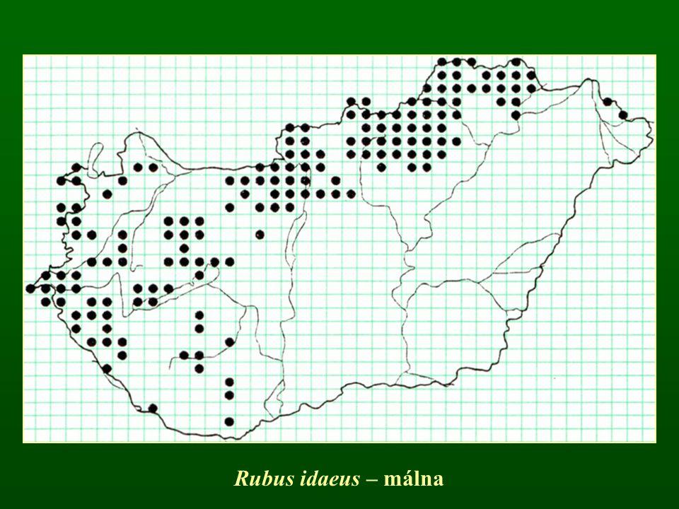 Rubus idaeus – málna