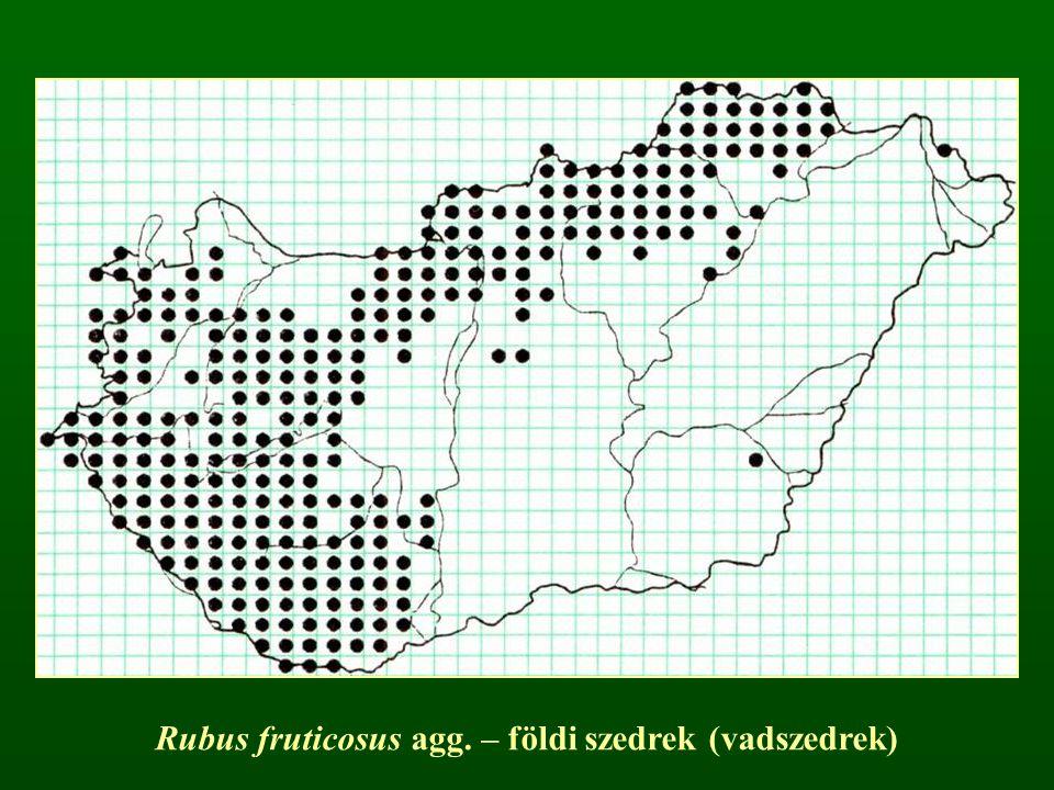 Rubus fruticosus agg. – földi szedrek (vadszedrek)