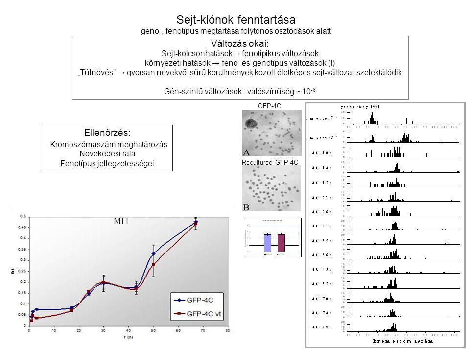 Sejt-klónok fenntartása
