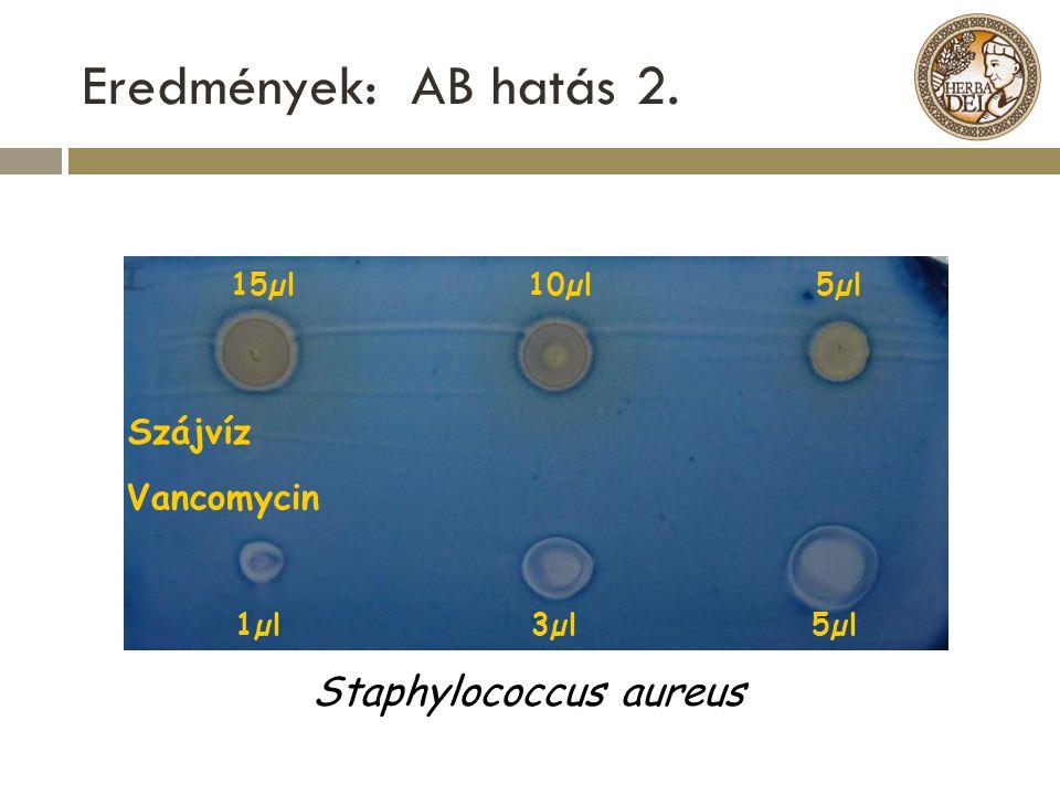 Eredmények: AB hatás 2. Staphylococcus aureus Vancomycin 15µl 10µl 5µl
