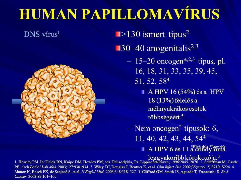 HUMAN PAPILLOMAVÍRUS >130 ismert típus2 30–40 anogenitalis2,3