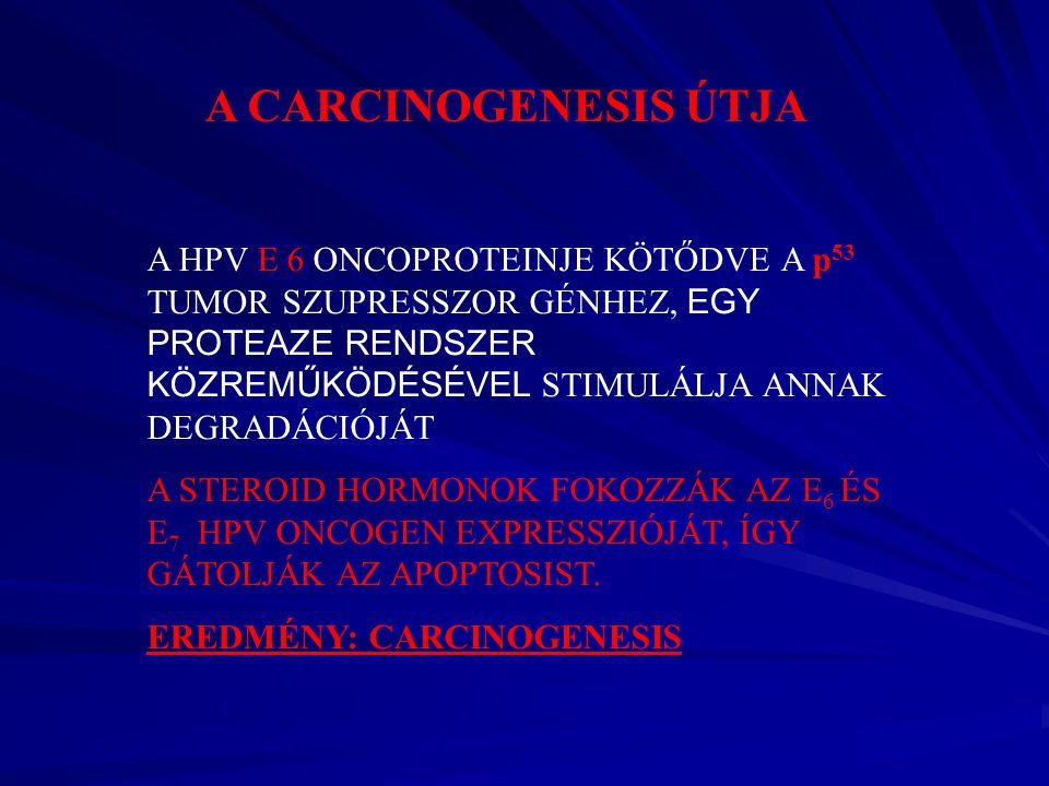 A CARCINOGENESIS ÚTJA