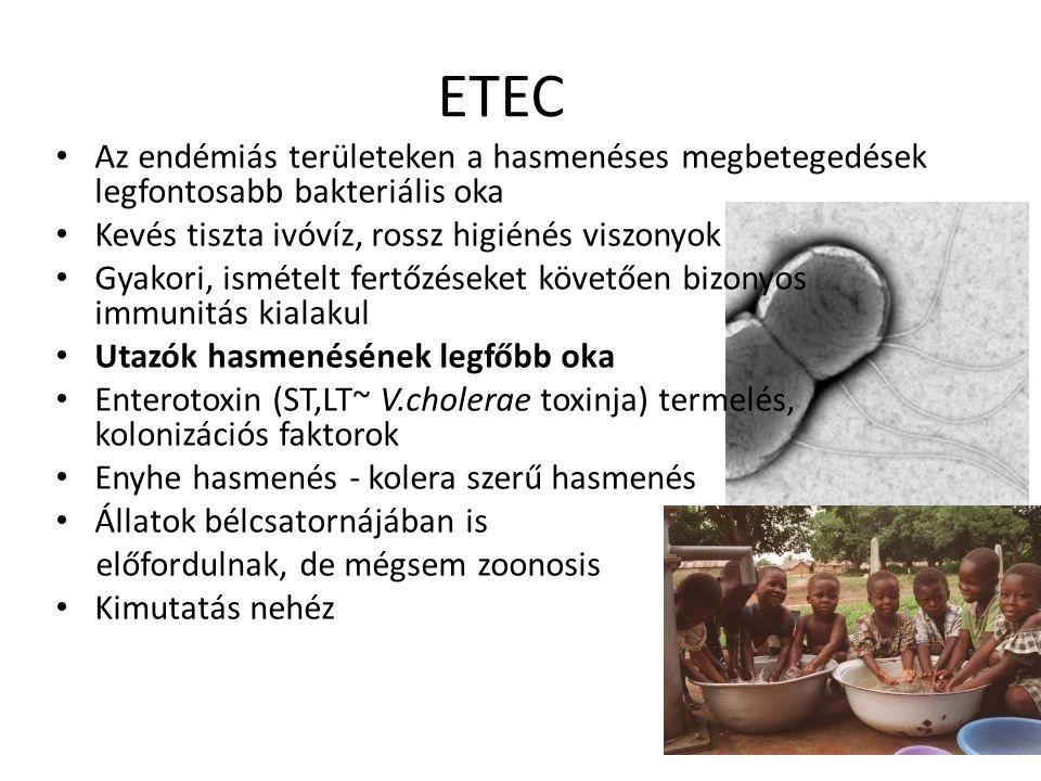 ETEC Az endémiás területeken a hasmenéses megbetegedések legfontosabb bakteriális oka. Kevés tiszta ivóvíz, rossz higiénés viszonyok.