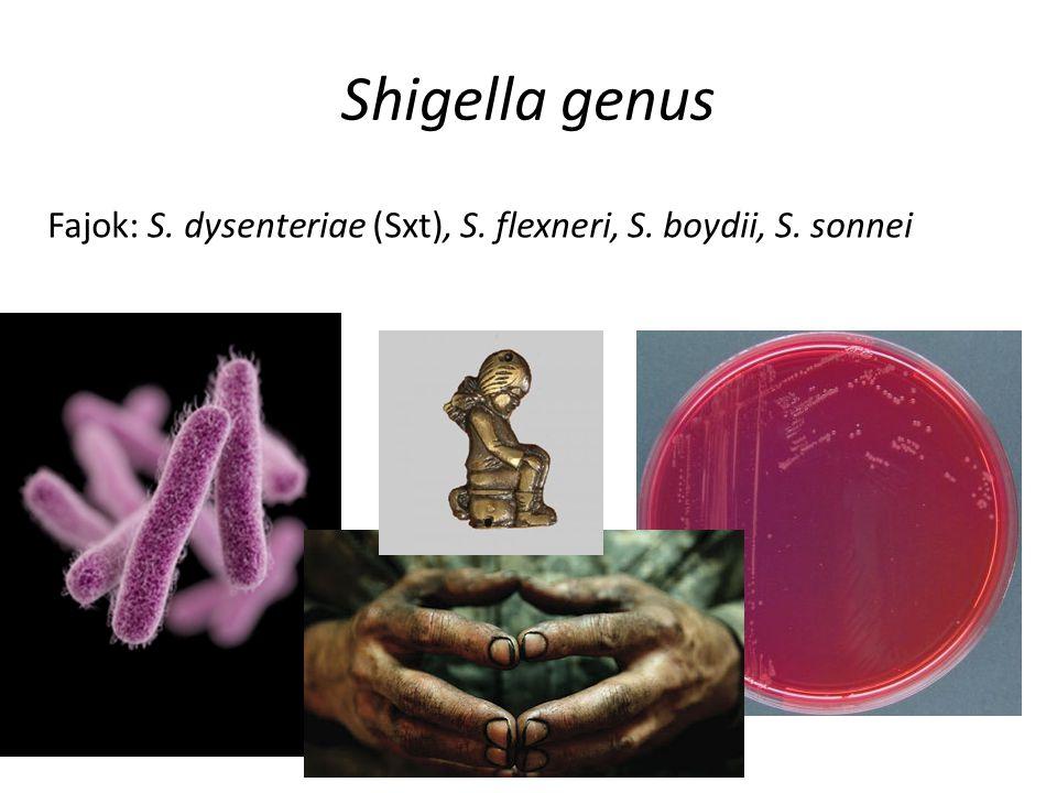 Fajok: S. dysenteriae (Sxt), S. flexneri, S. boydii, S. sonnei