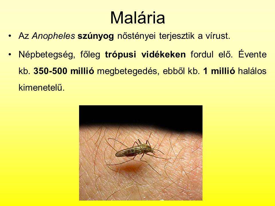 Malária Az Anopheles szúnyog nőstényei terjesztik a vírust.
