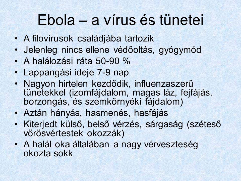 Ebola – a vírus és tünetei