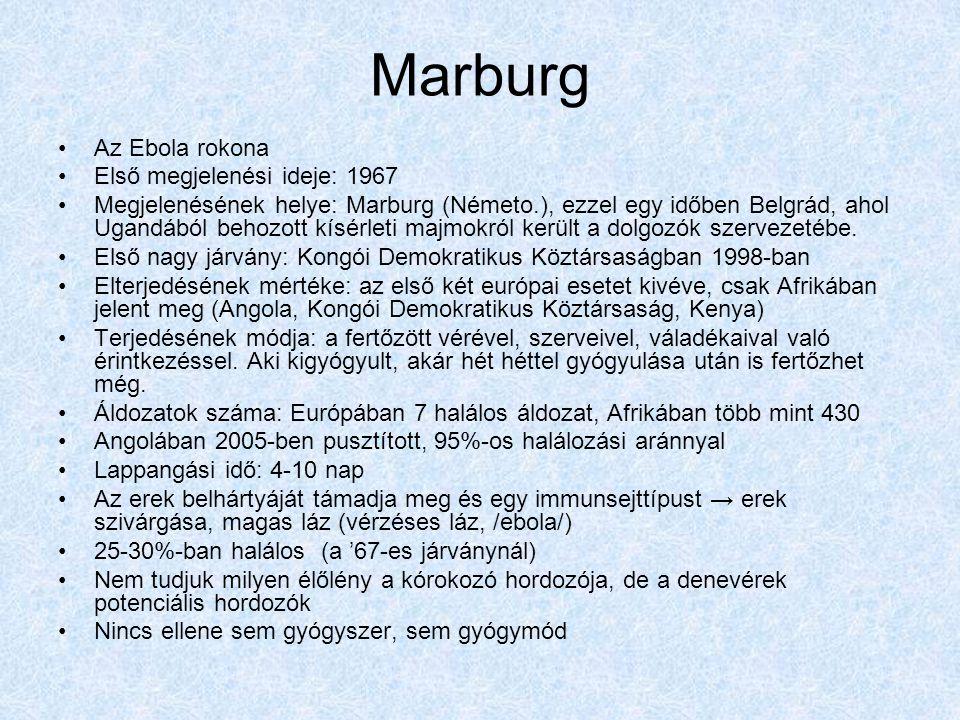 Marburg Az Ebola rokona Első megjelenési ideje: 1967