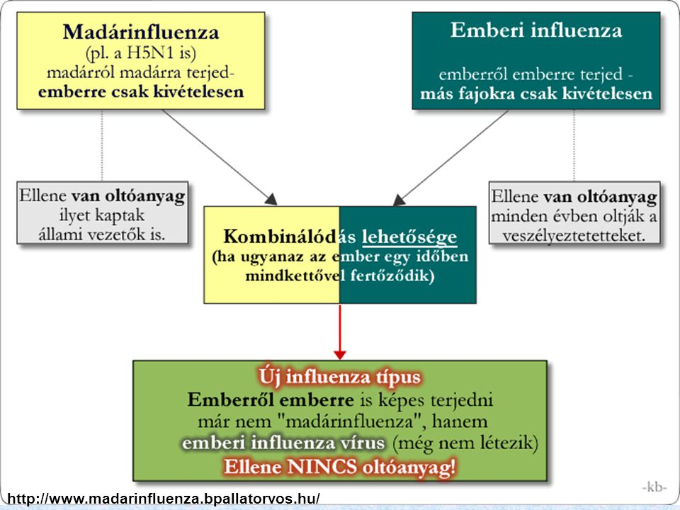 http://www.madarinfluenza.bpallatorvos.hu/