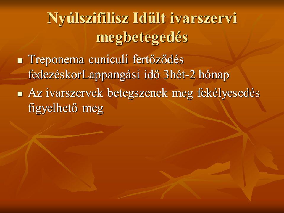 Nyúlszifilisz Idült ivarszervi megbetegedés