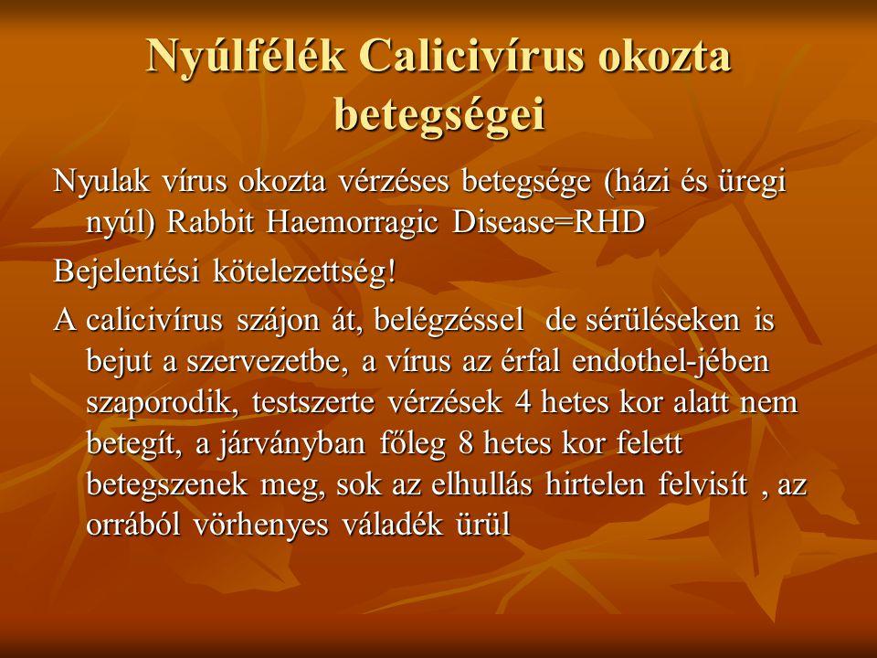 Nyúlfélék Calicivírus okozta betegségei