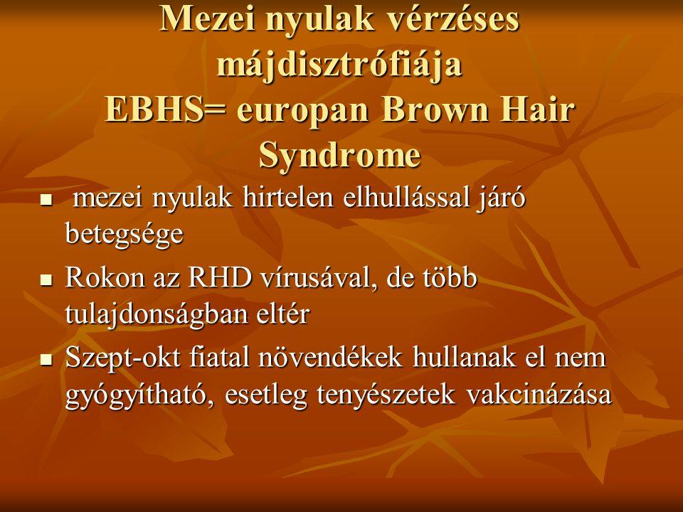 Mezei nyulak vérzéses májdisztrófiája EBHS= europan Brown Hair Syndrome