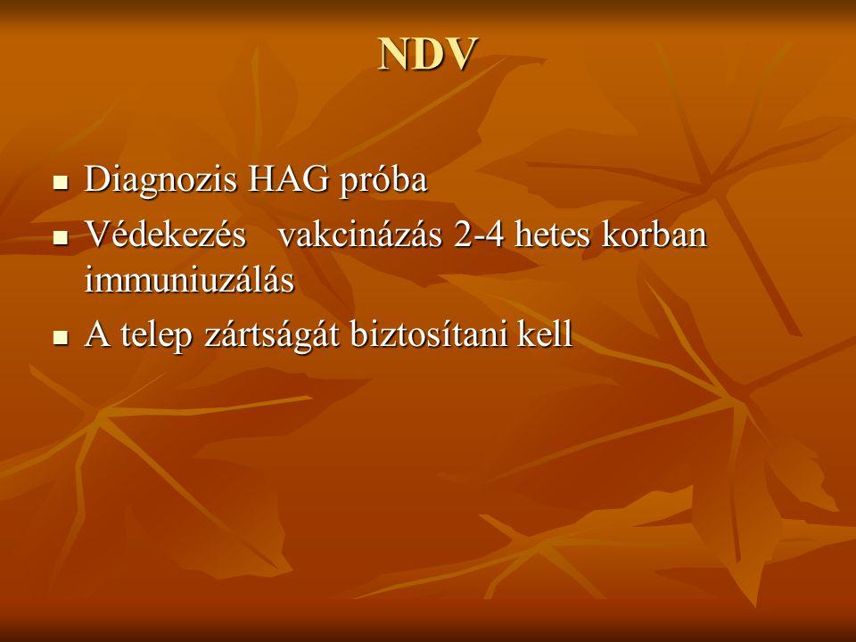 NDV Diagnozis HAG próba