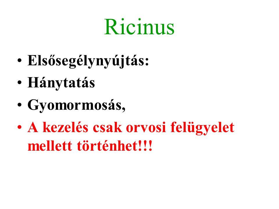 Ricinus Elsősegélynyújtás: Hánytatás Gyomormosás,