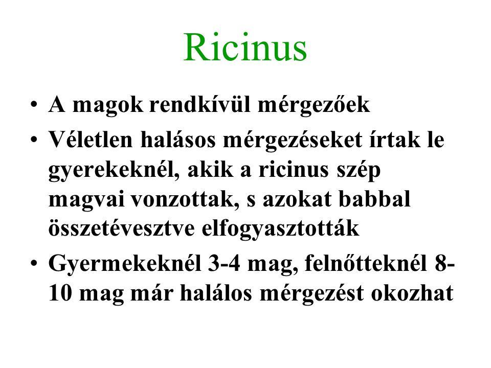Ricinus A magok rendkívül mérgezőek