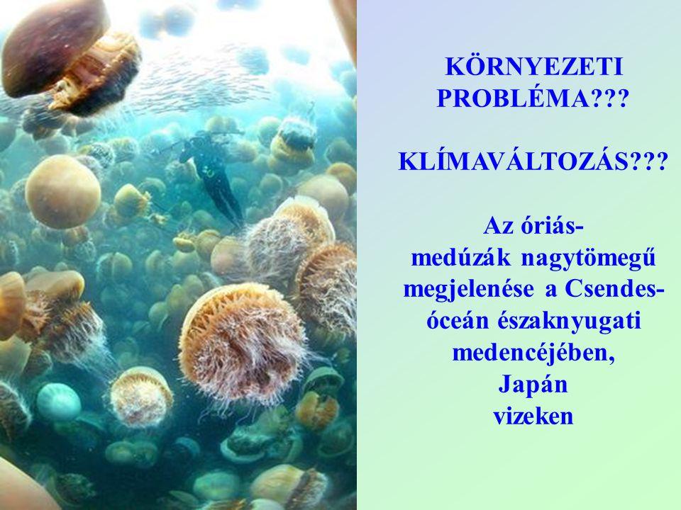 KÖRNYEZETI PROBLÉMA KLÍMAVÁLTOZÁS Az óriás- medúzák nagytömegű megjelenése a Csendes-óceán északnyugati medencéjében,