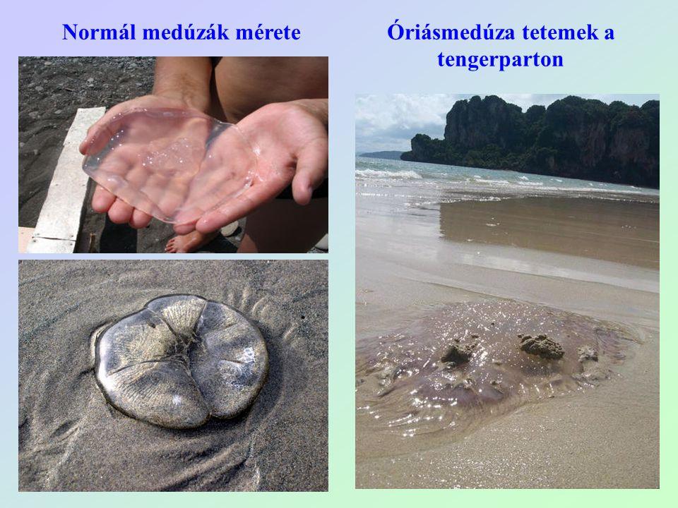Óriásmedúza tetemek a tengerparton