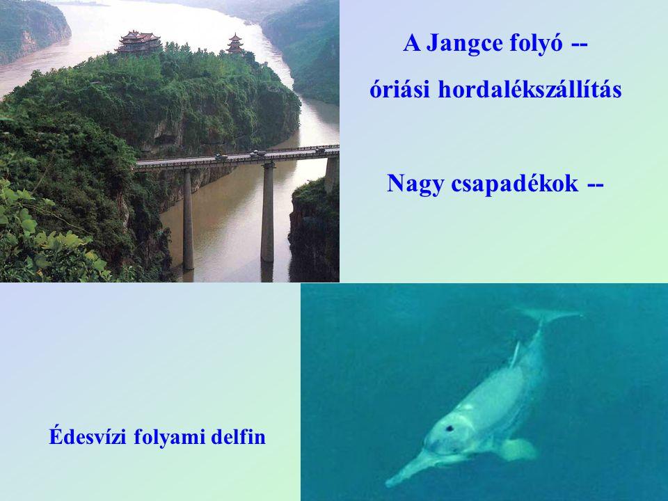 óriási hordalékszállítás Édesvízi folyami delfin