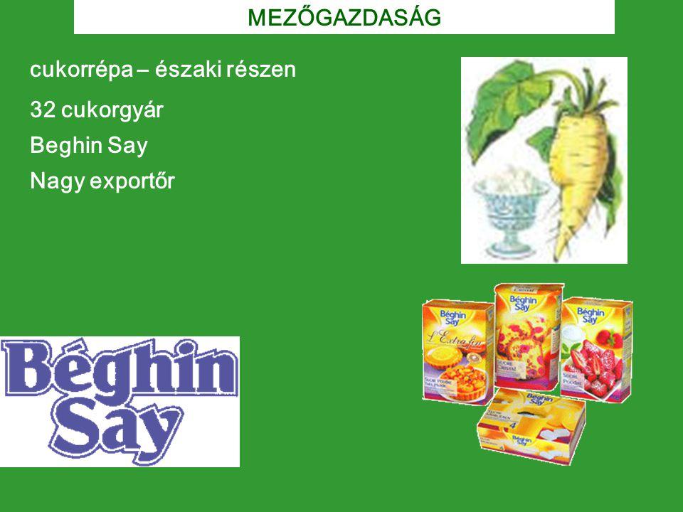 MEZŐGAZDASÁG cukorrépa – északi részen 32 cukorgyár Beghin Say Nagy exportőr
