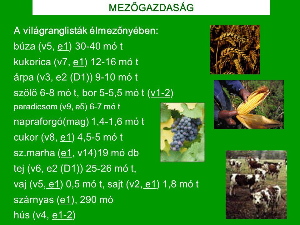 A világranglisták élmezőnyében: búza (v5, e1) 30-40 mó t