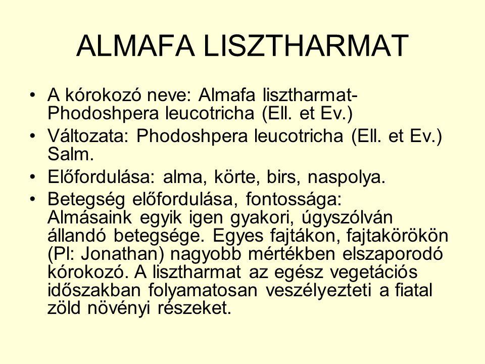 ALMAFA LISZTHARMAT A kórokozó neve: Almafa lisztharmat- Phodoshpera leucotricha (Ell. et Ev.) Változata: Phodoshpera leucotricha (Ell. et Ev.) Salm.
