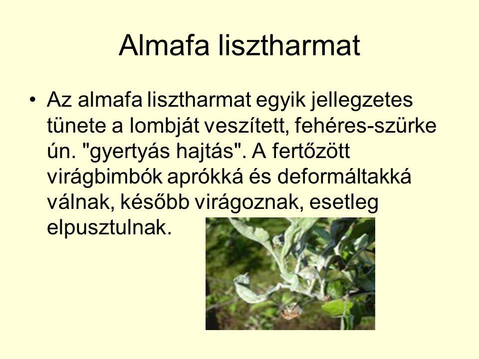 Almafa lisztharmat