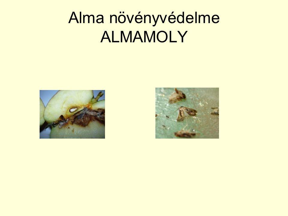 Alma növényvédelme ALMAMOLY