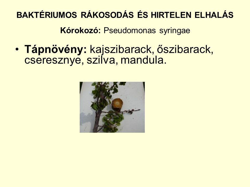 Tápnövény: kajszibarack, őszibarack, cseresznye, szilva, mandula.