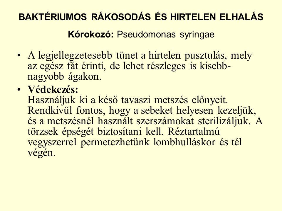 BAKTÉRIUMOS RÁKOSODÁS ÉS HIRTELEN ELHALÁS Kórokozó: Pseudomonas syringae