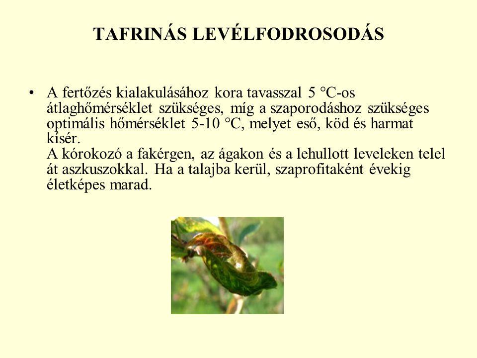 TAFRINÁS LEVÉLFODROSODÁS