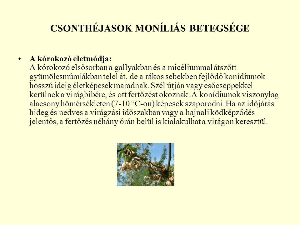 CSONTHÉJASOK MONÍLIÁS BETEGSÉGE