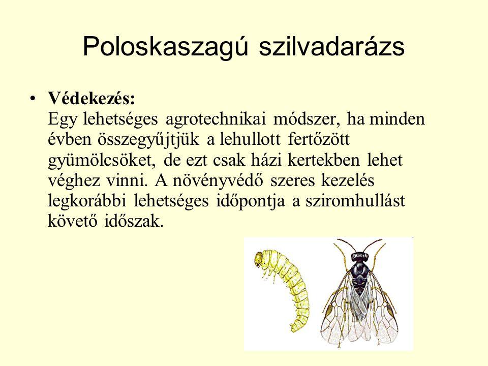 Poloskaszagú szilvadarázs