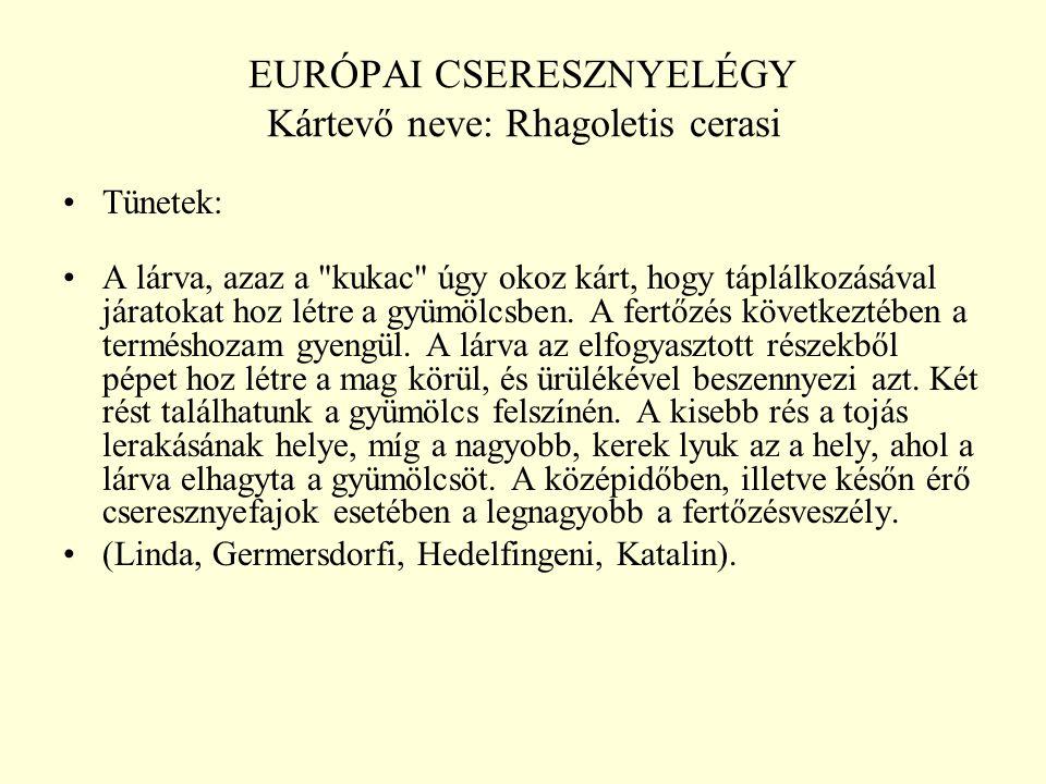 EURÓPAI CSERESZNYELÉGY Kártevő neve: Rhagoletis cerasi