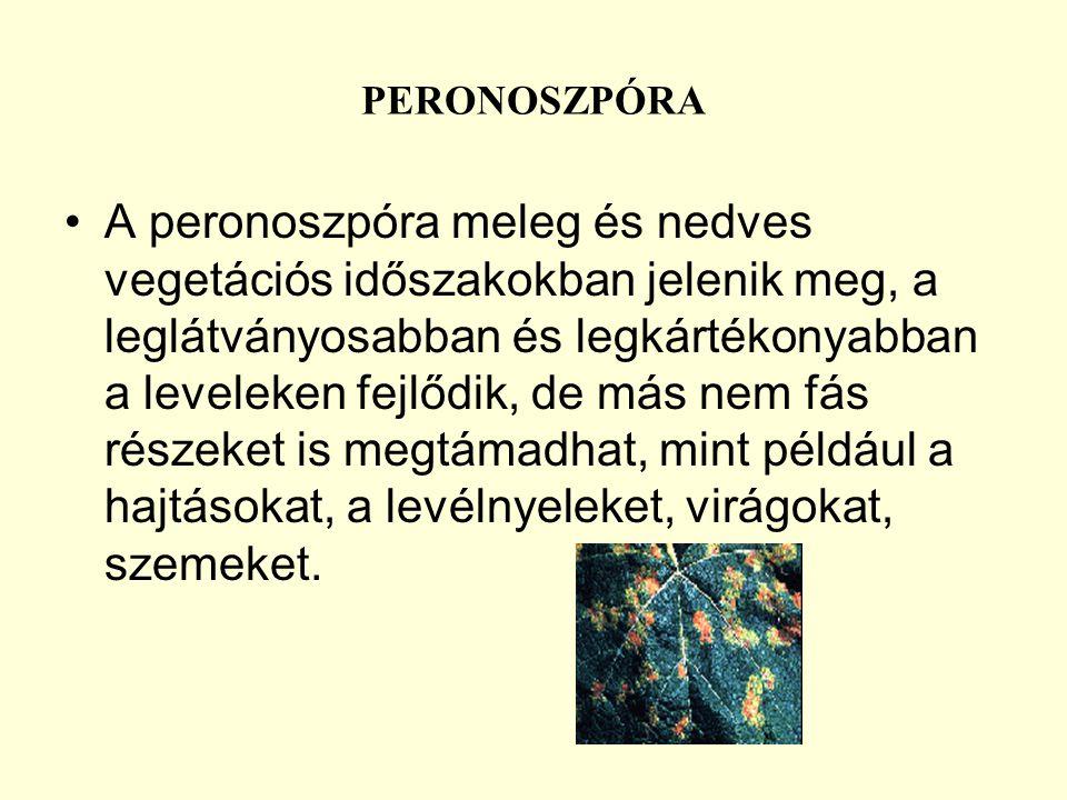 PERONOSZPÓRA