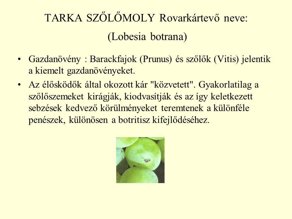 TARKA SZŐLŐMOLY Rovarkártevő neve: (Lobesia botrana)