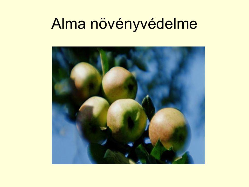 Alma növényvédelme