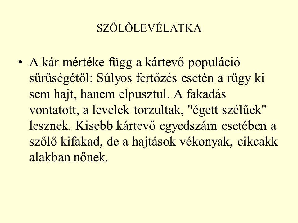 SZŐLŐLEVÉLATKA